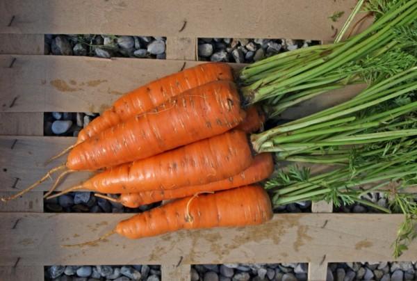 Karotte Riesen von Colmar 2 Saatgut