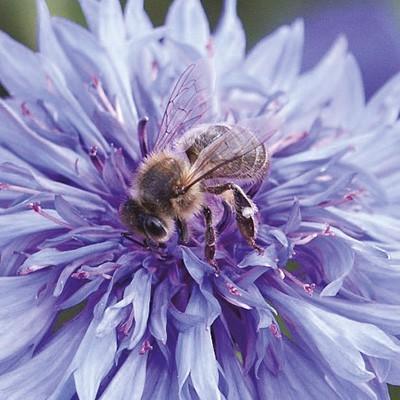 Tübinger Bienenweide